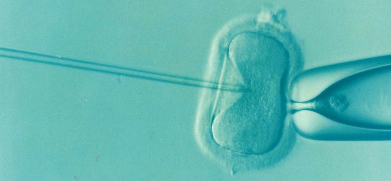 IVF bevruchting embryo